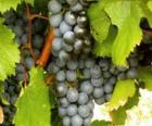 Un racimo de uva