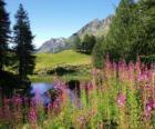 Un lago con flores en primer plano y altas motañas