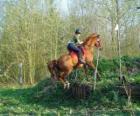 Técnica de Recorrido Ecuestre de Competición, pone a prueba el entendimiento entre el caballo y el jinete mediante distintas pruebas.