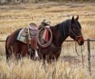 Caballo de un cowboy