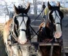 Dos caballos tirando de un carro