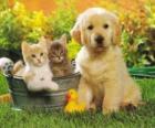 Perrito junto a dos gatitos