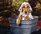 Perrito tomando un baño