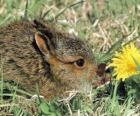 Conejo con una flor