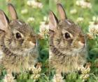 conejo timido
