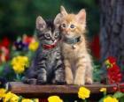 dos gatos con collar