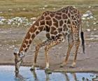 jirafa bebiendo en una charca