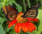 dos preciosas mariposas cara a cara