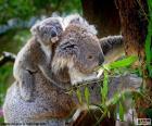 Koala trepando un árbol