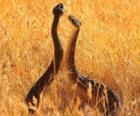 Serpientes en el campo