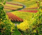 paisaje de otoño en la Viña