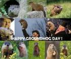 El Día de la Marmota es una fiesta que se celebra en los EUA y Canadá el 2 de febrero
