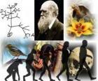 Día de Darwin, Charles Darwin nació el 12 de febrero de 1809. Árbol de Darwin, el primer esquema de su teoría de la evolución