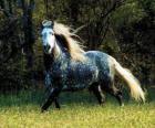 Precioso caballo con larga crin y larga cola