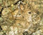 Conejo entre la maleza
