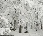 Bosque completamente nevado