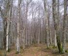 Bosque sin hojas en invierno