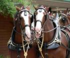 Dos bonitos caballos de tiro