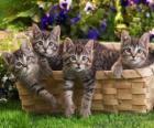 Cuatro gatitos dentro de una cesta
