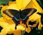 Preciosa mariposa sobre una flor amarilla