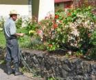 Jardinero regando en primavera