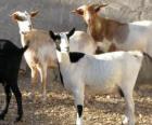 Cabras domésticas