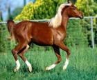 Joven y elegante caballo