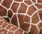 La piel de las jirafas