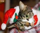 Gato con un sombrero de Papá Noel
