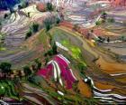Las Terrazas de Yunnan, China
