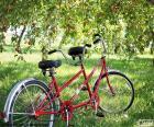 Tándem de dos ciclistas. Tipo de bicicleta especial con más asientos y más pedales