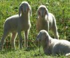 Tres corderos