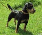 Terrier alemán o Jagdterrier