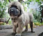 Cachorro de Šarplaninac