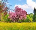 Cerezo en primavera