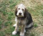 Cachorro de Otterhound