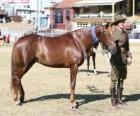 Waler caballo originario de Australia