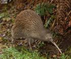 Kiwi ave