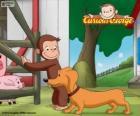 El mono George y Hundley el perro salchicha