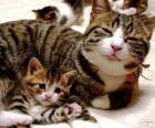 Mamá gata con su bebé gato