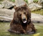Gran oso en el agua