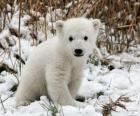 Un pequeño oso