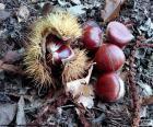 Castañas, uno de los frutos típicos del otoño