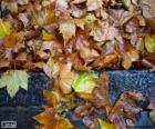 Hojas mojadas después de una lluvia de otoño