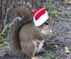 Ardilla con el gorro de Papá Noel