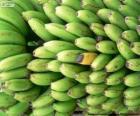 Plátanos verdes y amarillo