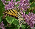 Mariposa tigre del Canadá