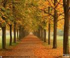 Camino entre árboles en otoño