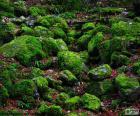 Piedras cubiertas de musgo