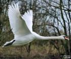Cisne blanco volando
